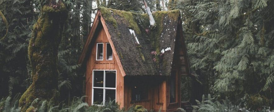 photo of wooden house in forest