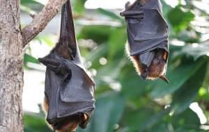 Bat Removal Lancaster PA