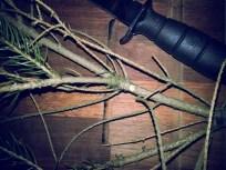 Vær meget påpasselig med fugleklatter på nålene.