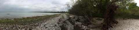 Lidt væltede træer igen