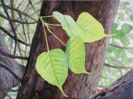 Bodhi Leaves and Bodhi Tree. 8 x 6 inches.
