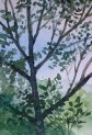 Trees, painting. watercolor on paper. (546x800)