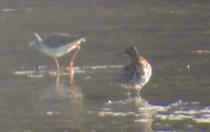 321-01-2012 Ruff 04:16:2012 Somerset Lake, Somerset Co., Mike Lanzone #2 copy