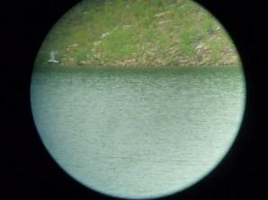 369-01-2012 Arctic Tern 05:22:2012 Elk State Park, Al Guarente #5
