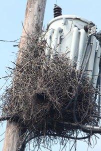 425-01-2012 Monk Parakeet #3 Allentown