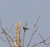 03a. WEKI 29 Sep 2012, Long Pond Trail, Presque Isle S.P., Pa., J. McWilliams