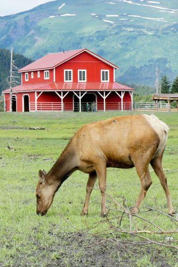 Oh, Elk
