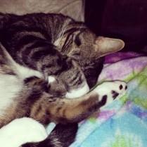 Kitten McNuggz