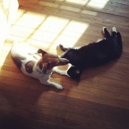 Sun Cuddles