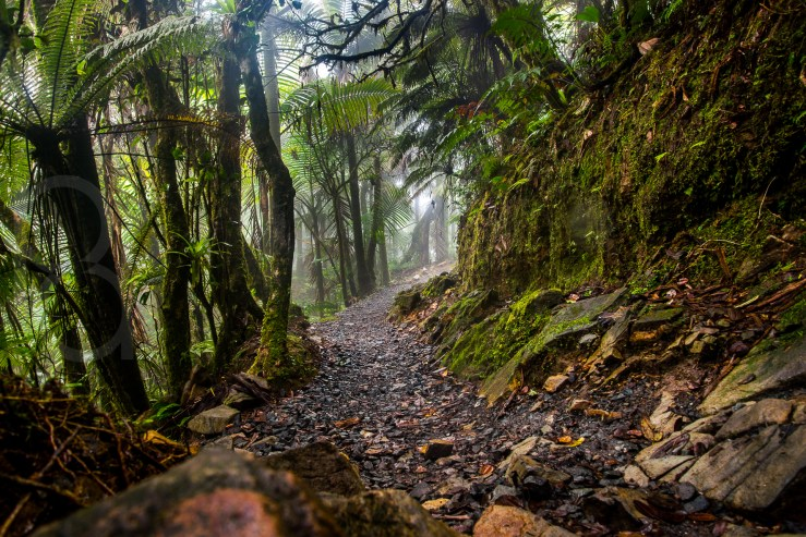 Rainforest, Puerto Rico