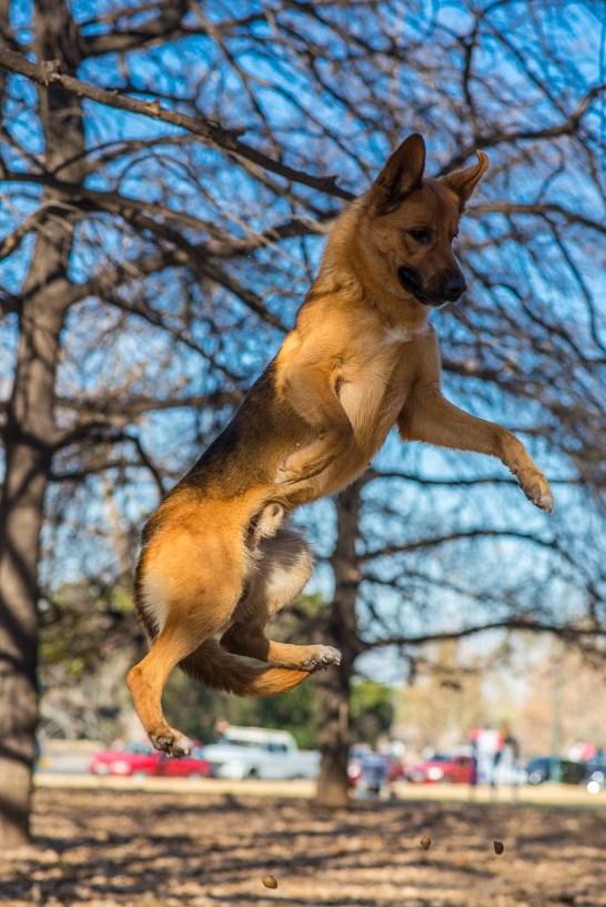 El Perro Maravilla