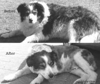 Dog_grooming_BA1_BW_oldboy (1)