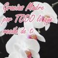 featured image GRACIAS MAMÁ