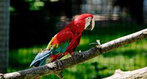 Papagei. Bild von Todd Ryborn
