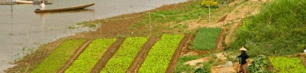 Farming along the river is a regular sight