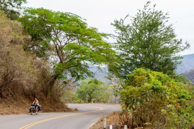 Large trees on Ruta 40