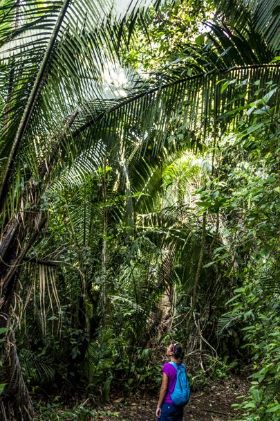 Jungle trek in Blue Hole National Park