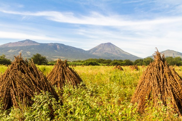 Field with volcano