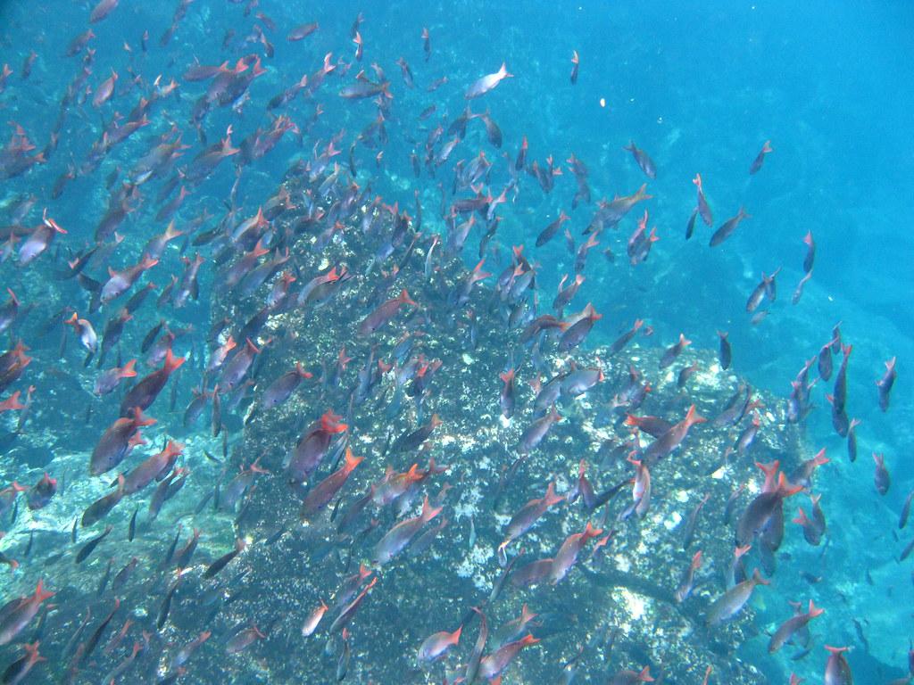 Réserve de poissons