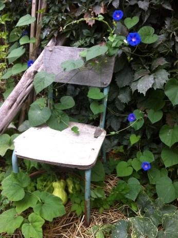 surprise! baby butternut squashes beneath the garden chair