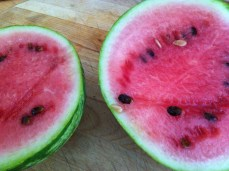 you'll be happy to see my last watermelon is fully ripe and luscious!
