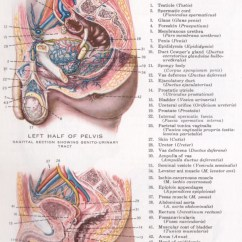 Throat Diagram Front View Whirlpool Wiring Range Physiology Index