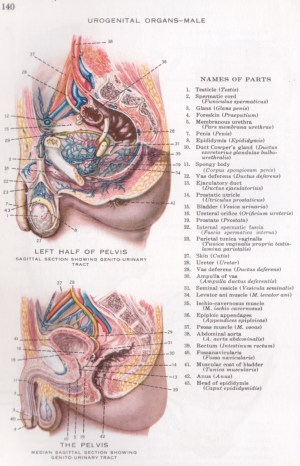 Physiology index