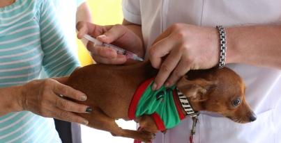 Iniciarán vacunación de perros y gatos en Mineral de la Reforma