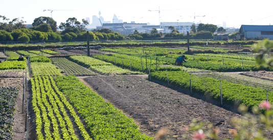Farms — for agriculture or tourists?