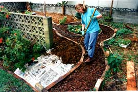 Spreading compost over a thick weed barrier of newspaper. The biointensive method was tried on this part of the garden. 25mm of compost was spread over the surface and incorporated into the soil profile by double digging.