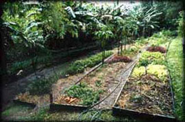 A vegetable garden above the chook pen on the edge of Byron Bay