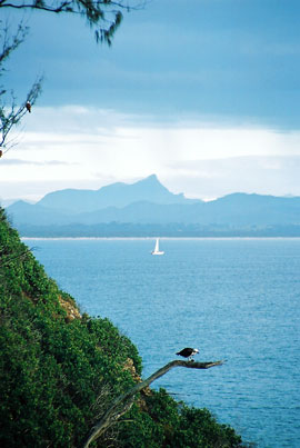 An iIconic image of the the far north coast of NSW — Mt Warning on the horizon, the bay and a sea eagle.