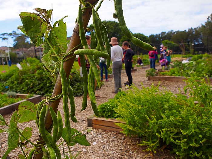 Community food growers converge on Rose Bay