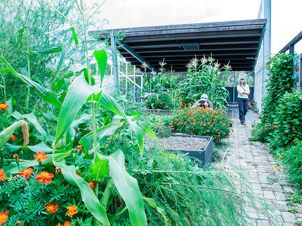 Fiona Campbell strolls through the Permaculture Interpretive Garden, a local government project. The garden offers take-home ideas about food production to visitors and is both a council training venue and a public park aimed at increasing urban food resiliency.