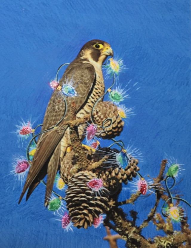 peregrine with solstice lights