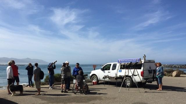 Morro Rock falcons, Bob Isenberg, Morro Bay, CA