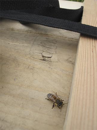 Honeybee on bee box