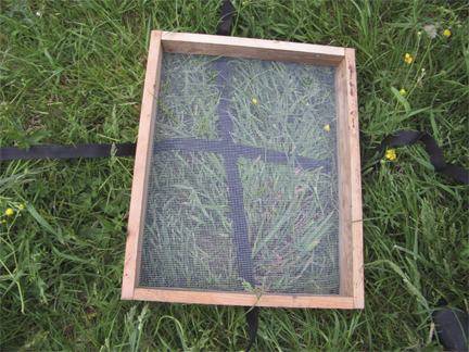 Bee hive moving screen