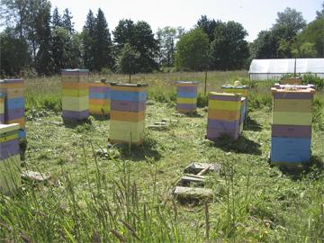 Honeybee hives in Northwest Washington state