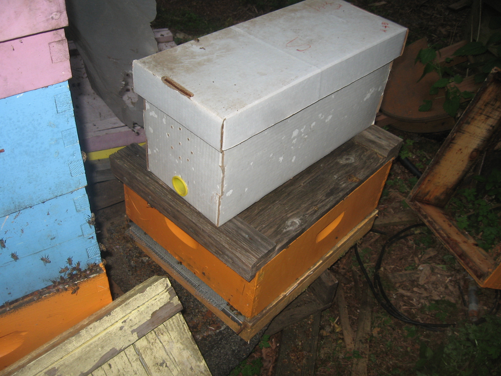 Boxed bees await a new location