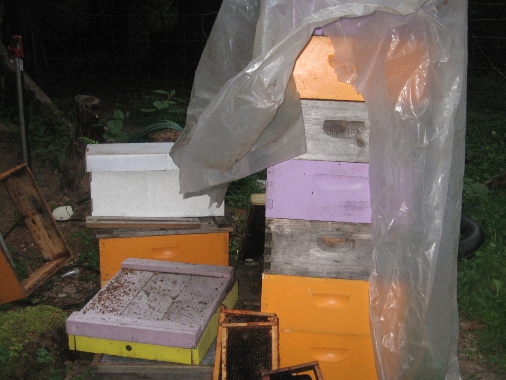 Stacks of bee boxes and new nuc