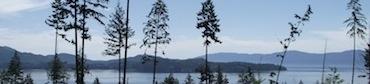 open sky trees