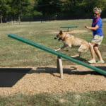 dog park teeter totter equipment