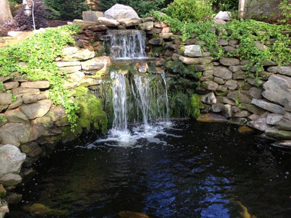 Backyard Pond Construction