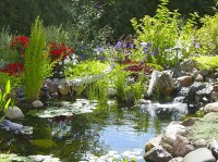 Natural backyard garden pond- Pacific Ponds