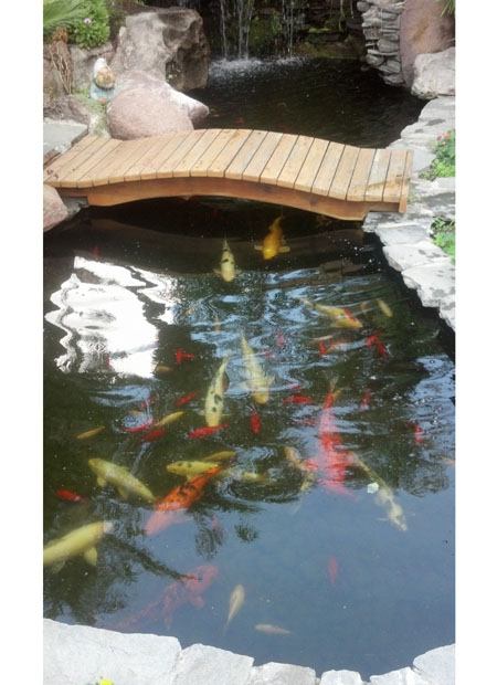 How Make Fish Pond