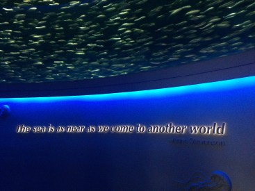 Open Sea at Monterey Aquarium