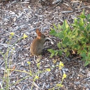 Bunny spotting