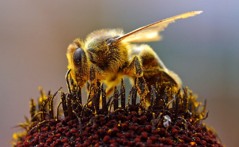 Yellow-Faced Bees Added to Endangered Species List
