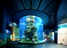 Aquarium World Avenues Malaysia Travel Packages